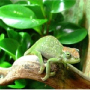 Bild zum Weblog Tierwelt am Äquator