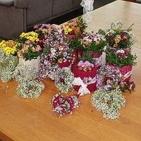 Bild zum Weblog Blumen, Blume, Blum, Blu, Bl, B…